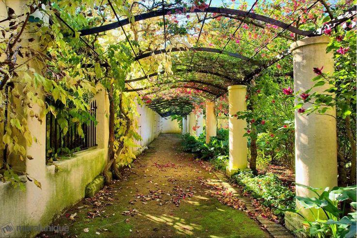 Jardin à Western Cape, Afrique du Sud 12' x 8' (3,66m x 2,44m)