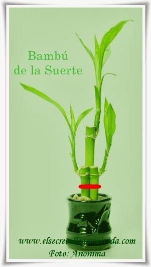 Esto para el Feng Shui tiene una explicación muy lógica y es que el Bambú representa al Elemento Madera que colocado en número impar y con un lazo rojo de 18 o 27 cm o cualquier medida múltiple de 9, en el área de la Abundancia que es Elemento Madera, con el bambú quedaría representado y por lo tanto estaría equilibrando y activando ese Área. http://elsecretoenmivida.blogspot.com.es/2014/02/bambu-de-la-suerte.html