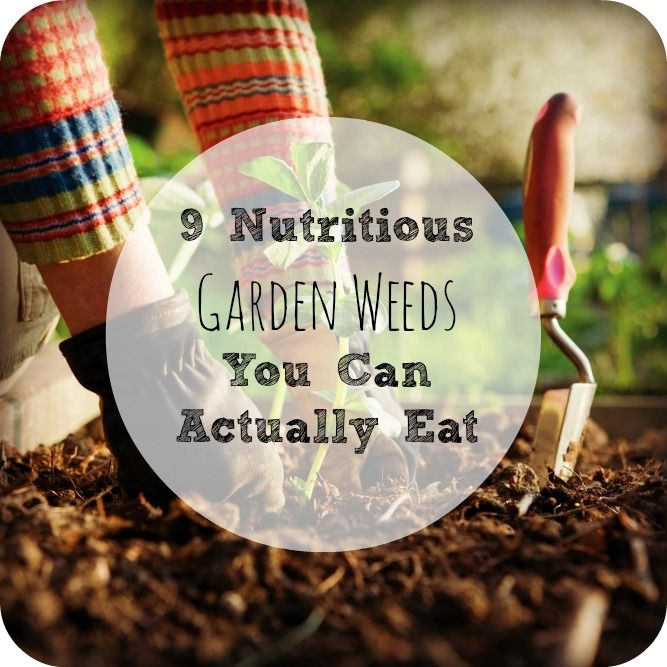 """There is a lot of natural, plant-based nutrition that we often rip up and toss as """"weeds"""" from our garden. Instead of throwing away these wild plants, try eating these 9 safe ones instead for a great (free!) source of nutrition!"""