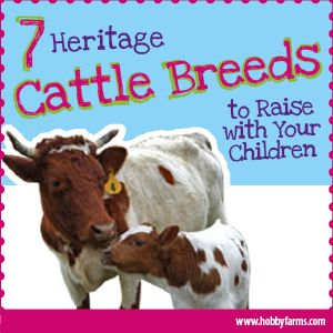 seven breeds of cows to raise with your family.  im so intrigued by the dexter and highland breeds.