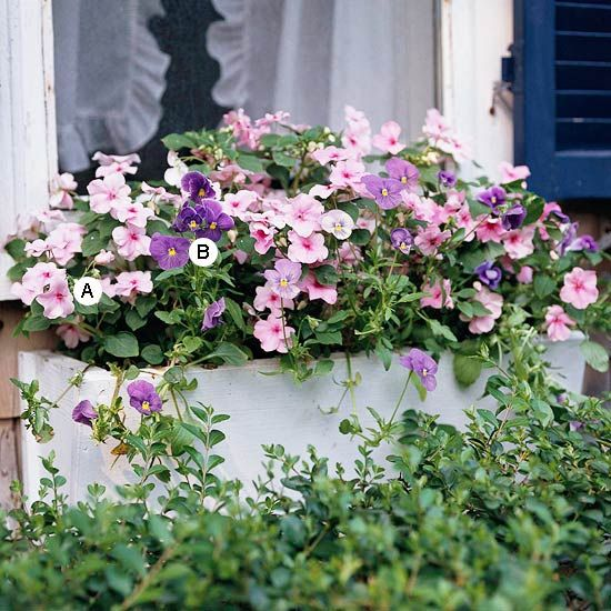 Easy Recipes for Window Boxes in Shade | Gardens, Summer ...