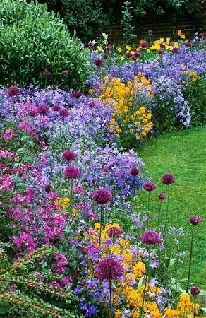 Mix boarder looks complicated at first glance, but dont be deceived. There are only four types of plants here! They are Allium hollandicum \u2018Purple Sensation\u2019 with Campanula patula and Erysimum allionii