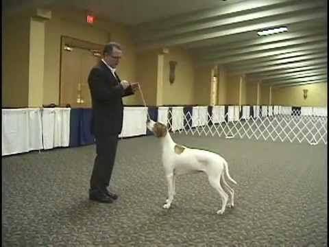 Dog Show Tips - Episode 2 - The Free Stack