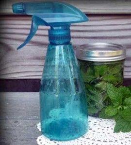 Lavender Mint Refresh Spray 270x300 Repelentes naturales contra las moscas