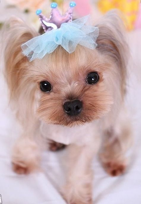 Different Ways To Make Dog Bows