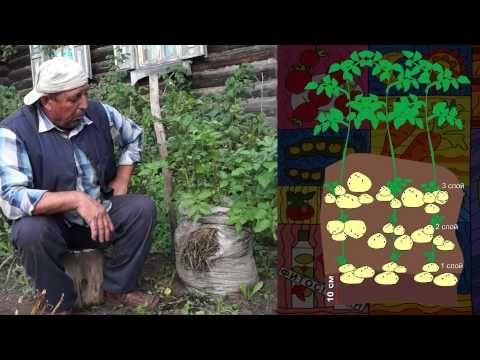 Картошка в мешке - YouTube