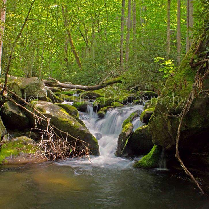92 best roaring fork motor nature trail images on for Motor trails in gatlinburg tn