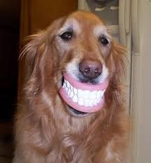Hows your smile? Don't forget to floss and brush twice a day for healthy teeth! #dentist #funny #dog