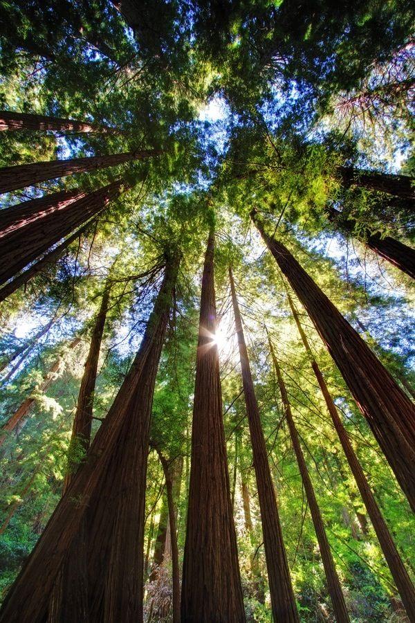 Muir Wood National Park, Northern California, San ...