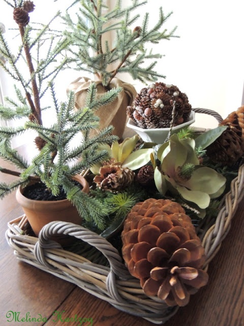 The Refeathered Roost: Evergreen and Pine Cones