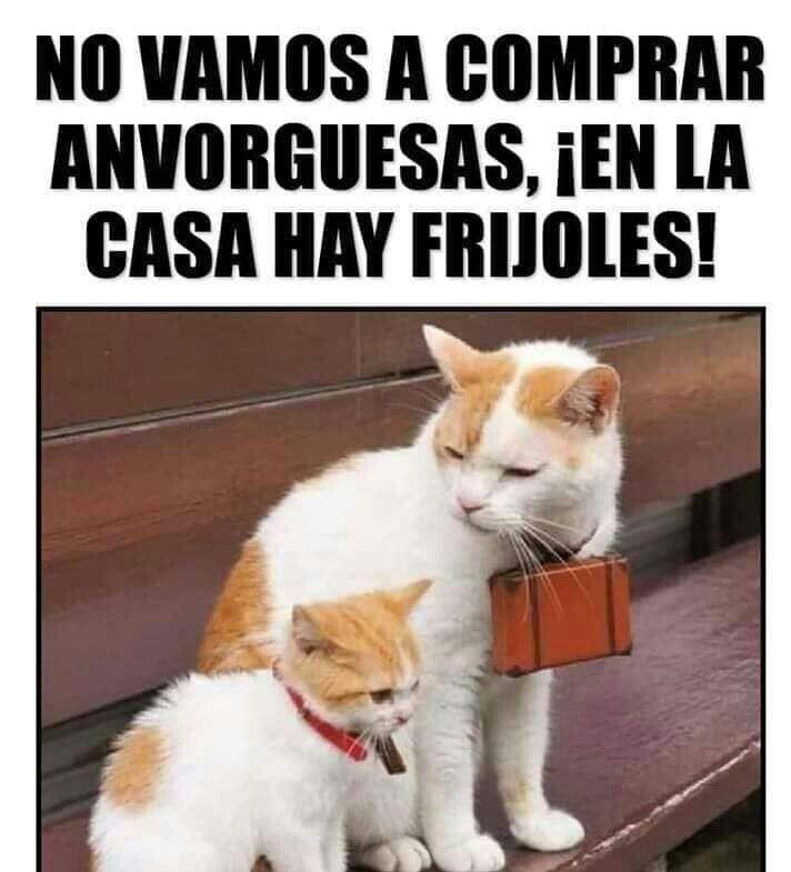 Memes Cute Memes Funny Spanish Memes Funny Relatable Memes