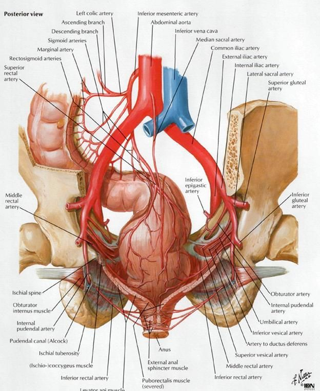 intranet.tdmu.edu.ua data kafedra internal anatomy classes_stud en stomat ptn 1 27%20Vessels%20and%20nerves%20of%20thorax.%20Anterior%20branches%20of%20thoracic%20spinal%20nerves.htm