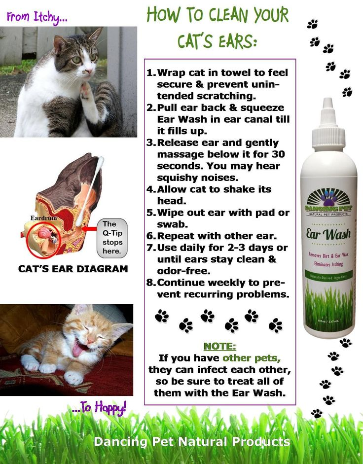 Healthy cat ear wax visit the image link for more