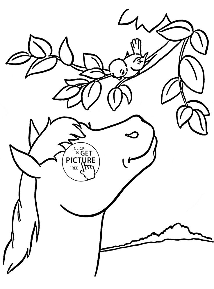 Simple Farm Animal Coloring Book