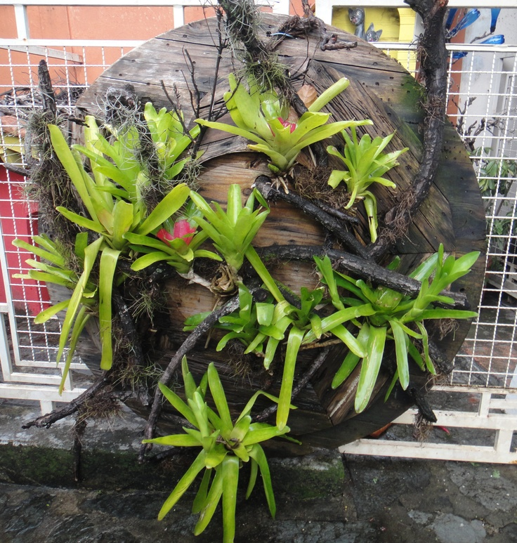 17 Best Images About Bromeliad Living Wall On Pinterest