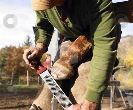 Farrier Filing Horse Hoof stock