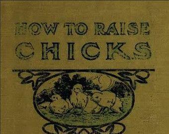 Comment élever POUSSINS Elevage de volaille Volaille Poulet diarrhée Nourrir œufs à couver poules incubateur livre eBook instantanée Téléchargement numérique .Pdf
