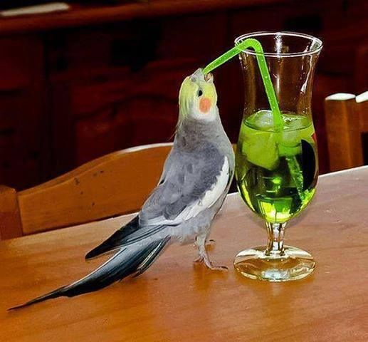 It's my drinks......