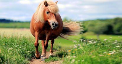 Das Equine Cushing Syndrom beim Pferd