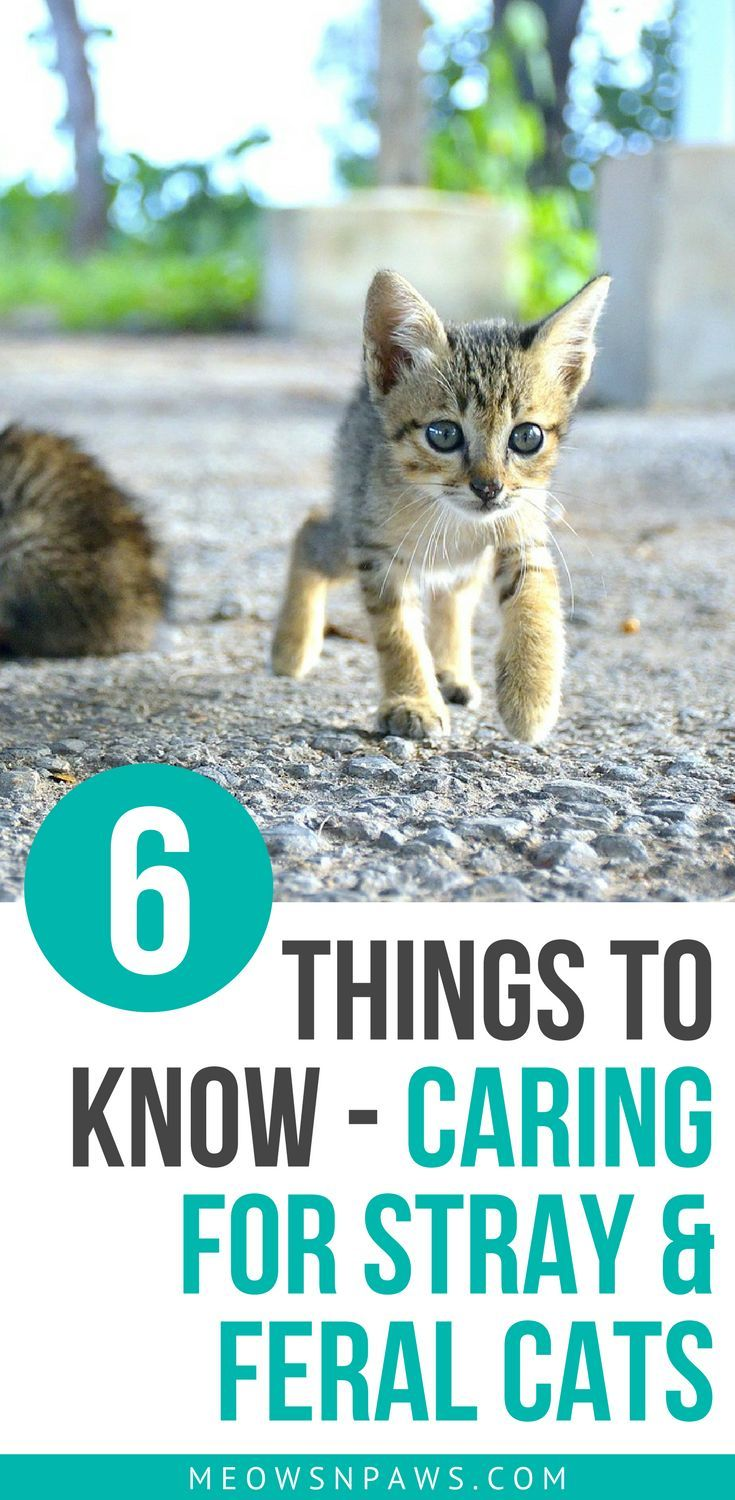 How To Care For Stray And Feral Cats 6 Things To Know Feral Cats Cats Sick Cat