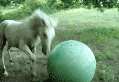 Kan niet omgaan met de verantwoordelijkheid die komt met zittend op een oefening bal.