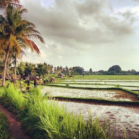 Ubud rice field walk - Jalan Kajeng