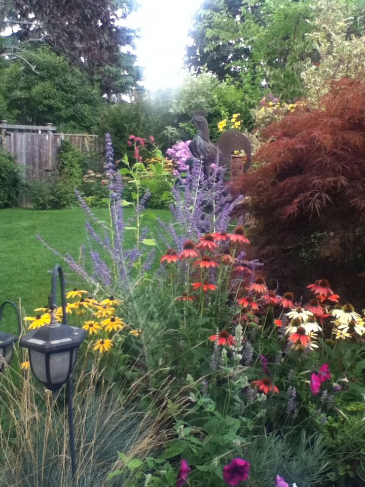 Echinacea and perovskia with Japanese maple leading into the long view.