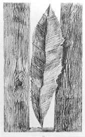 EXPERIMENTATIONS CP CONDORCET / LE FROTTAGE Max Ernst
