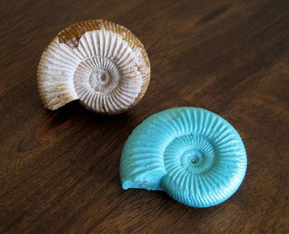 Ammonite Fossil brooch and pendant - Made in Australia.