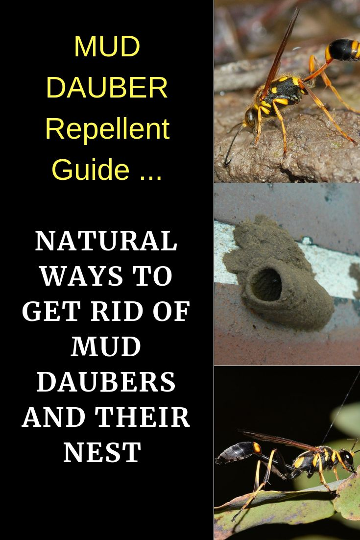 11 natural ways to get rid of mud daubers and their nest