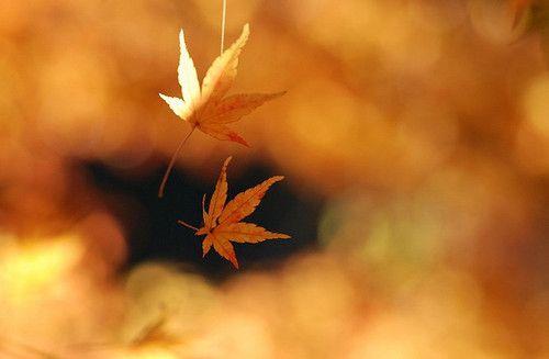 O sol O sol é um amigo que festejamos na primavera, evitamos no verão, adoramos no outono e choramos no inverno.
