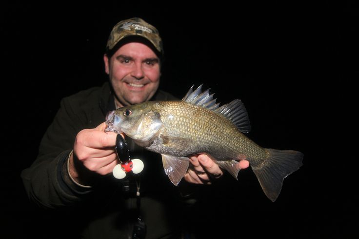 The fun really happens after dark. Australian Bass on Halco Nightwalker.