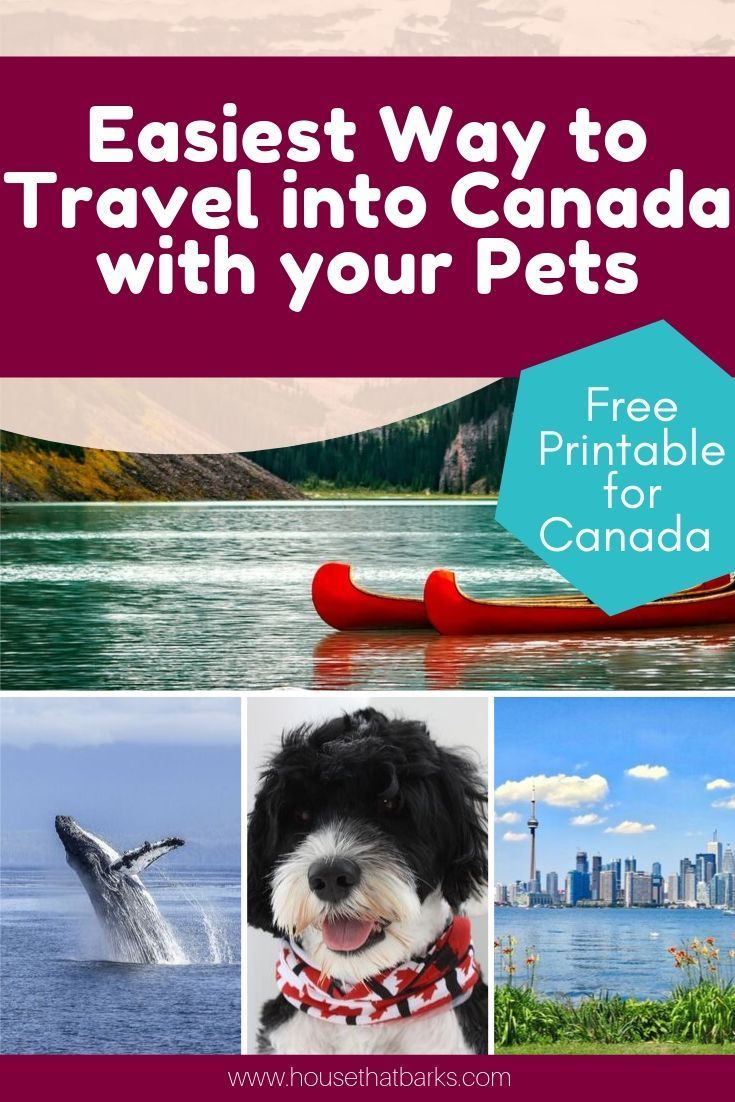 9 Best Tips For Traveling To Canada With A Dog Pet Travel Road