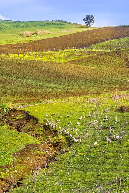 18 best siziliens tiere und pflanzen images on pinterest
