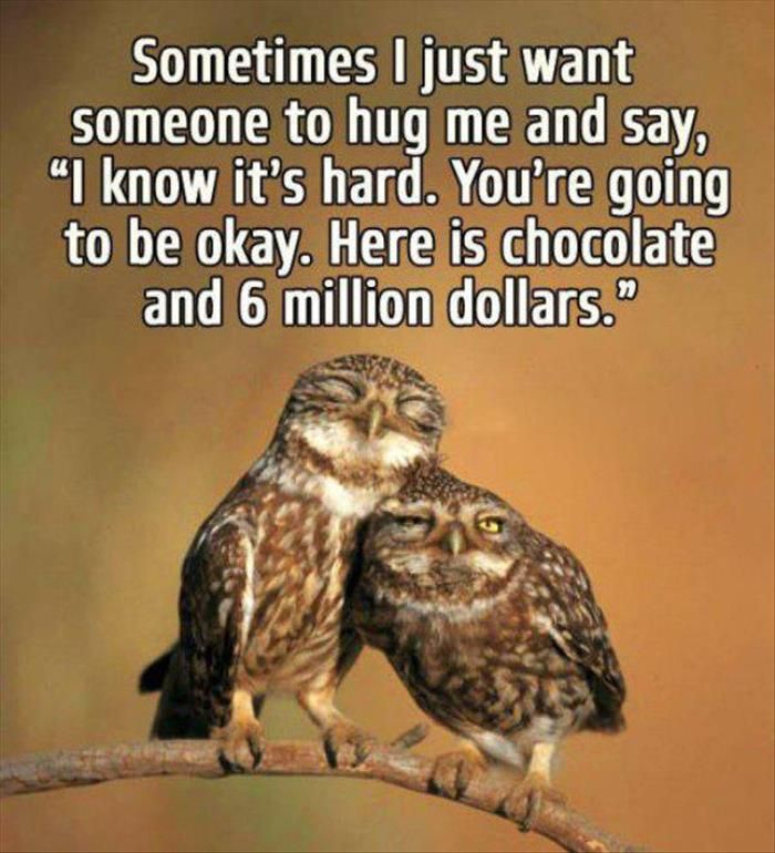 Best 25 funny owl pictures ideas on pinterest funny - Animal pak motivational quotes ...