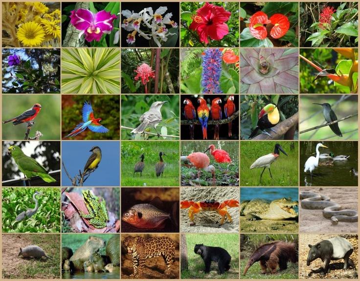 Flora y Fauna de Venezuela