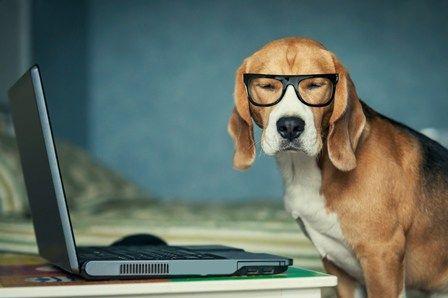 În cazul în care un câine ar fi profesorul tău, acestea sunt câteva dintre lecțiile pe care le-ai putea învăța