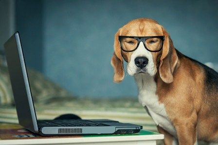 If a dog were yourteacher, these are some of the lessons you might learn
