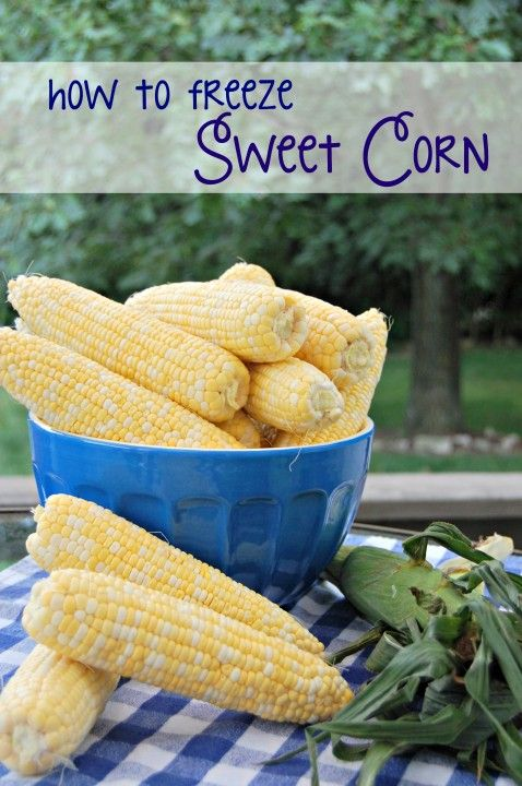 How to freeze sweet corn without blanching - the EASY way!! - The Cutting Back Kitchen