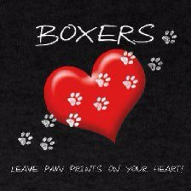 BoxersBoxers Things For My Wal, Leaves Paw, Boxers Dogs, Things Boxers, Boxers Leaves, Paw Prints, Beautiful Boxers, Furries Friends, Boxers Luv