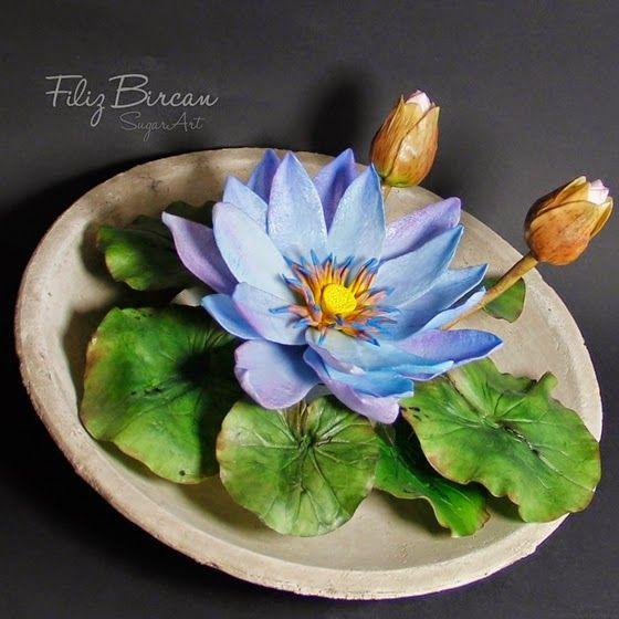 Mavi Nilüfer (Blau Lotus) via the dauphine