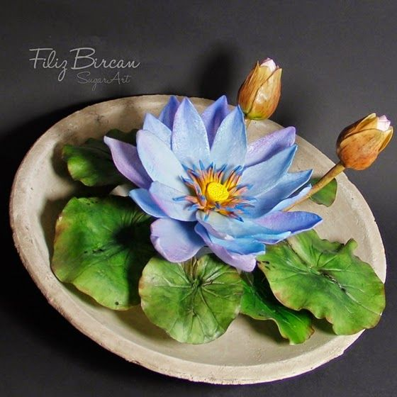 Mavi Nilüfer (Blau Lotus) via the dauphine