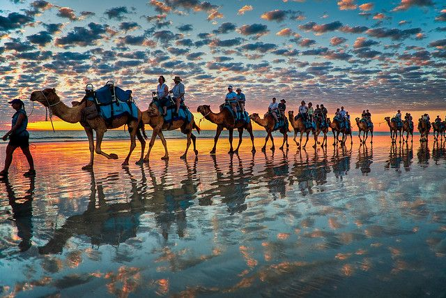 Camels at Sunset, Cable Beach W.A