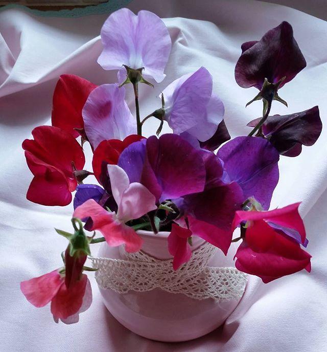 Thankful Thursday! #sweetpea #thankfulthursday #flowers #vase  #flowerphotography #naturalbeauty #bringthebeautyin #colourful #cheerful #garden #home  #gratitude Natural Beauty from BEAUT.E