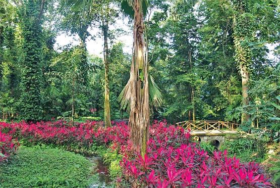 17 best images about yaracuy venezuela on pinterest for Jardin botanico san felipe