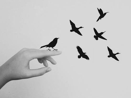 """""""As I watched the seagulls, I thought: That's the road to take; find the absolute rhythm and follow it with absolute trust"""" ~ Nikos Kazantzakis"""