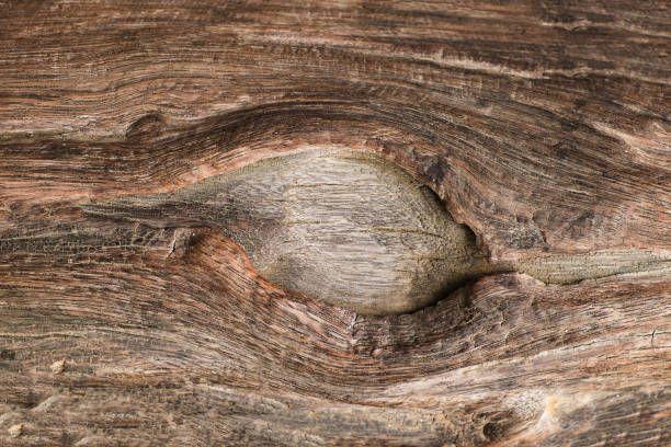 closeup of dark wood background