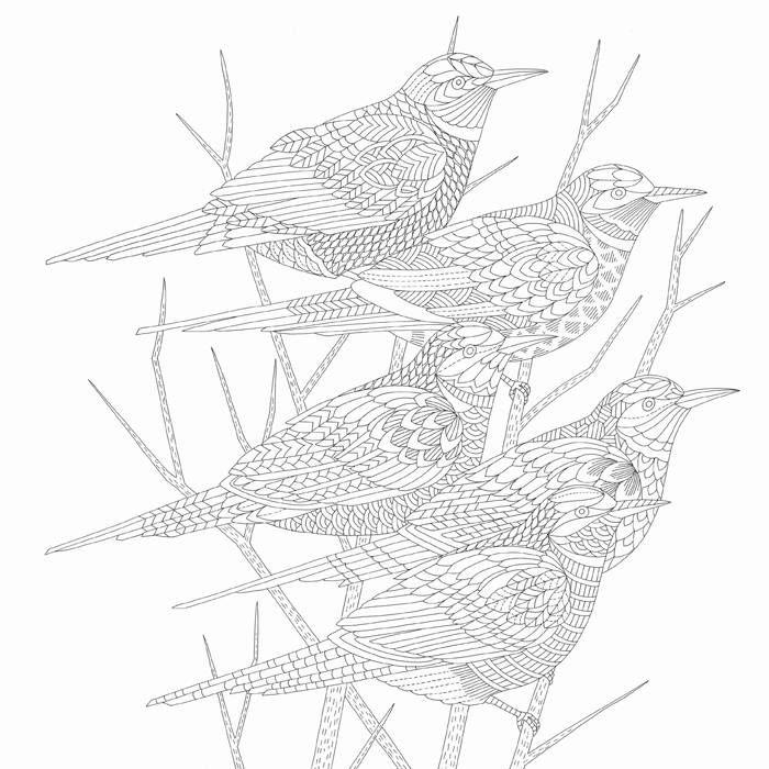 Afbeeldingen Vogels Kleurplaten 62 Beste Idee 235 N Over Dierenrijk Kleurboek Millie Marotta