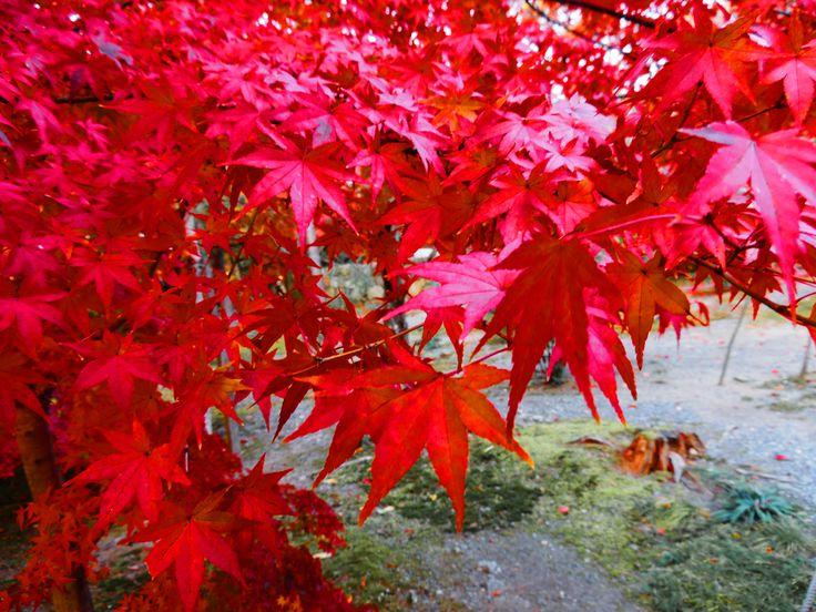 京都 夷川発電所付近の紅葉