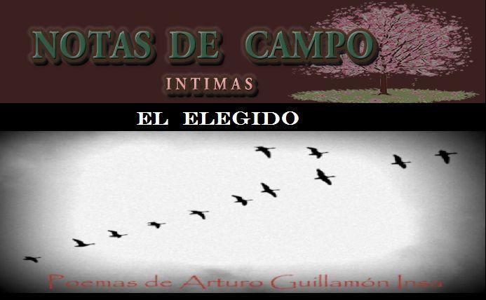 BLOGOTECA: Poemas de Arturo Guillamón Insa